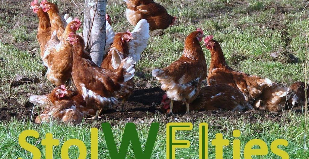 Eieren vrije uitloop M 6 stuks